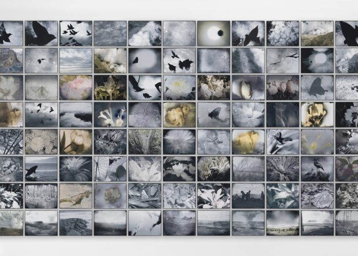 "Galerie Lelong & Co. Presents Michelle Stuart: ""Flight of Time"""