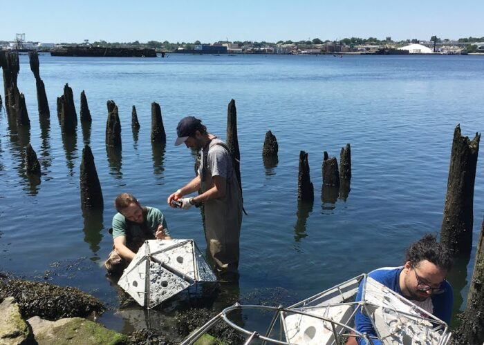Rhode Island School of Design Announces Creation of New Professorship in Sustainability